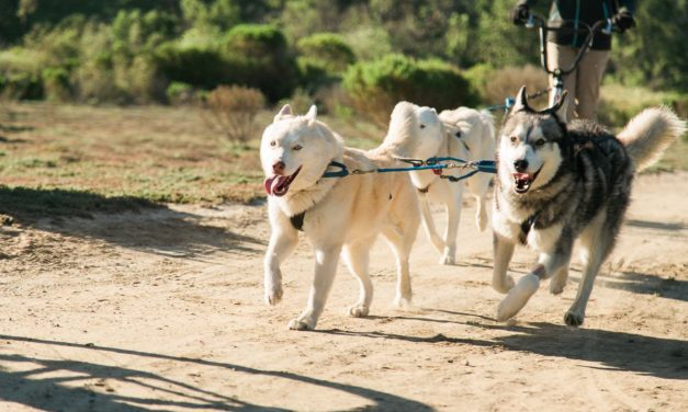 Running With The Pack
