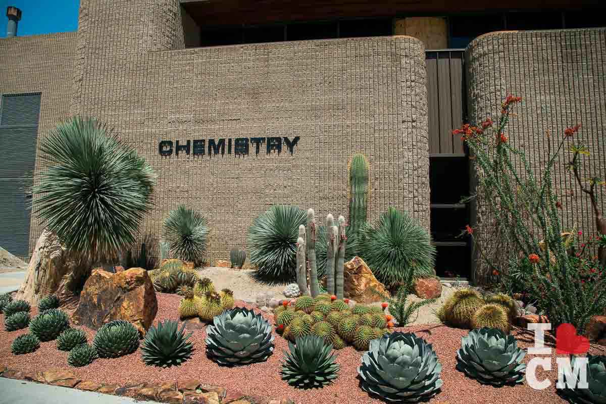 Orange Coast College: Some Cool Xeriscaping Outside The Chem Building