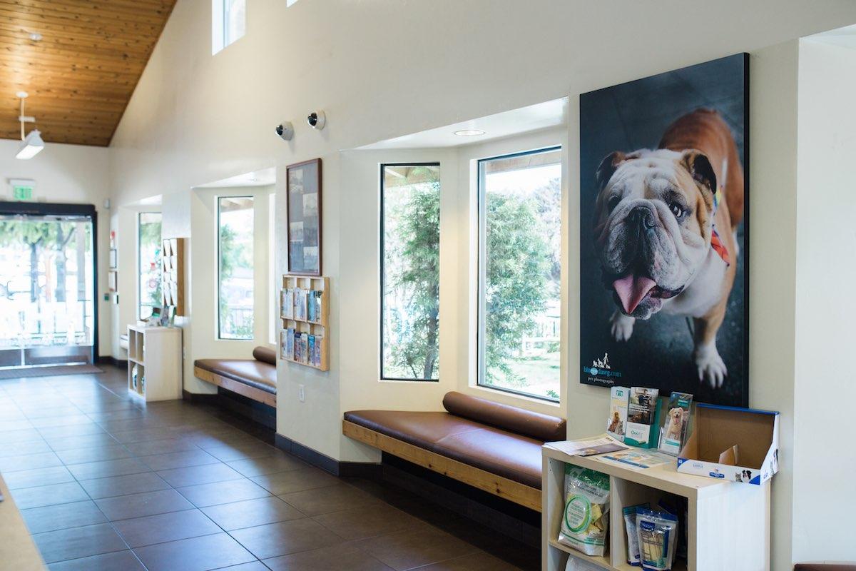The Lobby at Newport Harbor Animal Hospital and Veterinary Practice in Eastside Costa Mesa, California