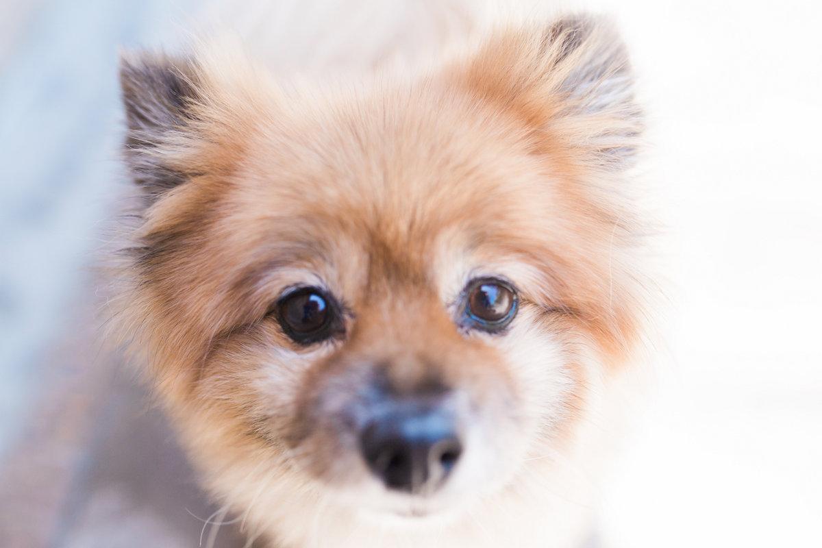 """Teddy"" A Boarding Guest at Newport Harbor Animal Hospital in Costa Mesa, California"