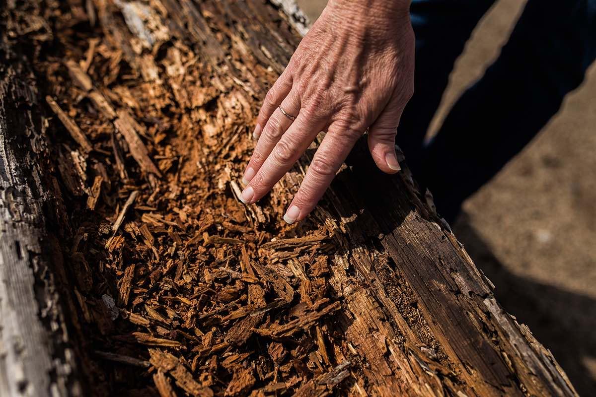 Nature Photographer Sharon Hurd Feels Termite Eaten Bark at Fairview Park in Costa Mesa, California