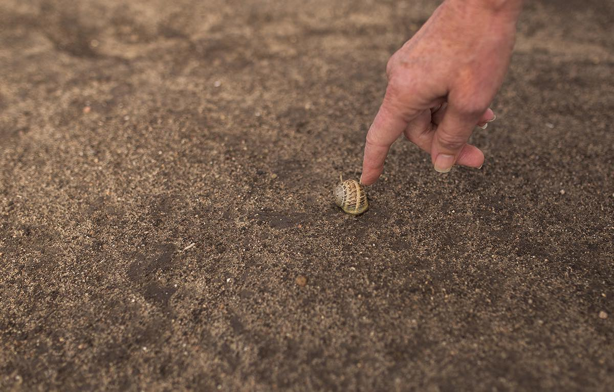 Photographer Sharon Hurd Points Out A Snail Shell at Fairview Park in Costa Mesa, California
